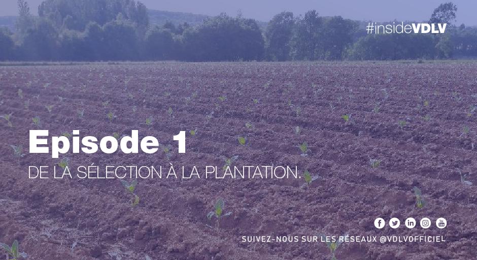 Episode 1 – Sélection et Plantation du tabac