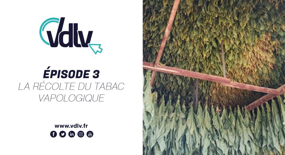 Episode 3 : La récolte du tabac vapologique